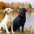 Собаки способны раньше всех «диагностировать» рак